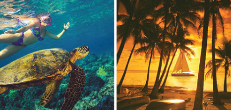 A Visitor Swimming with Turtles & a Tiami Catamaran Out on a Sunset Cruise, Barbados Pocket Guide