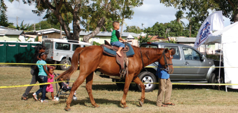 Young Boy Horseback Riding at Agrofest, Bridgetown, Barbados Pocket Guide