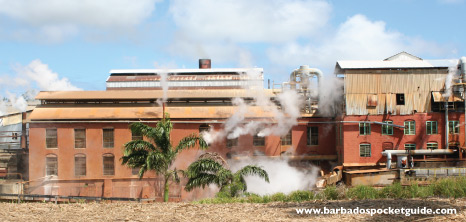 Andrews Sugar Factory, St. Joseph, Barbados Pocket Guide