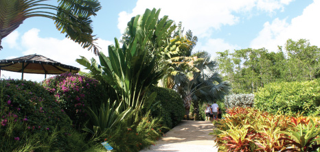 Graeme Hall Nature Sanctuary, Graeme Hall, St. Michael, Barbados Pocket Guide