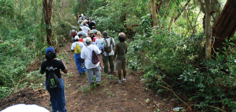 Hikers on an Early Morning Barbados National Trust Hike Heading Through Apes Hill, St. James, Barbados Pocket Guide