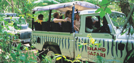 Island Safari Jeeps Driving Through a Bushy Area in St. Andrew, Barbados Pocket Guide