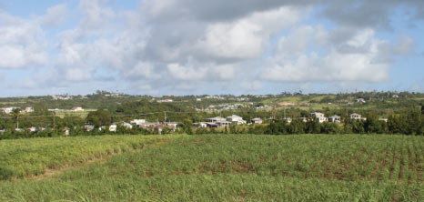 Canefields, Barbados Pocket Guide