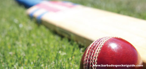 Cricket Bat & Ball Lying on the Cricket Field, Barbados Pocket Guide