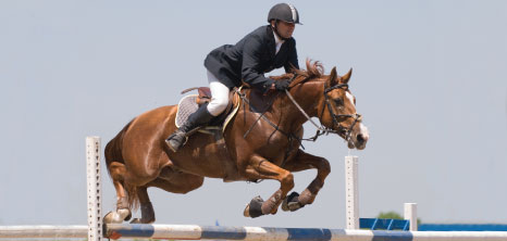 A Competitor of Equestrian Sports Show Jumping, Barbados Pocket Guide