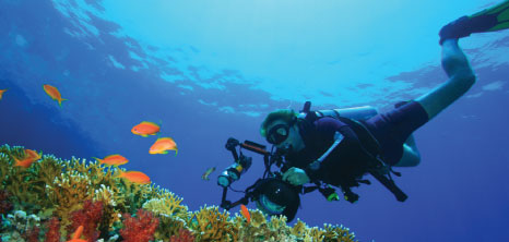 Scuba Diving - Barbados Pocket Guide