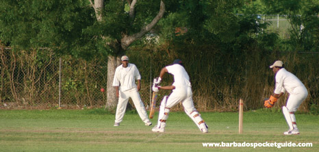 Cricketers Playing Cricket at Queen's Park, Bridgetown, Barbados Pocket Guide