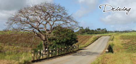 A Country Road in Barbados, Barbados Pocket Guide